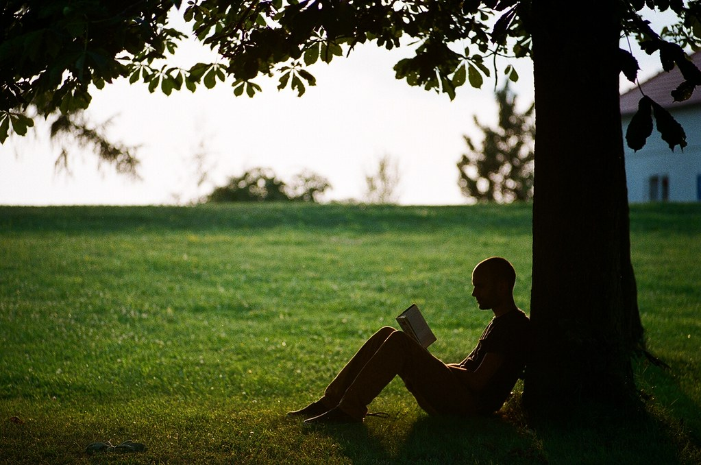 silhouette of person reading under a shade tree.